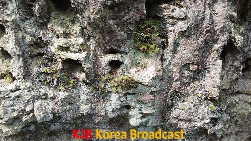 (사진자료)선운산 도립공원, 멸종위기 야생식물 석곡 확인 (2).png